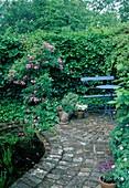 Versteckte kleine Terrasse am Teich, Rosa 'Veilchenblau' (Kletterrose, Ramblerrose), Hedera (Efeu) Hecke als Sichtschutz, blaue Bank, Tisch, Keramikkatze