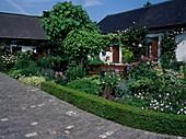 Vorgarten : Buxus (Buchs) Hecke, Stauden, Sitzgruppe unter Pergola mit Aristolochia (Pfeiffenwinde), Rosa (Rosen) und Catalpa bignonioides (Trompetenbaum)