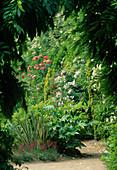 Blick auf Beet mit eingepflanzten Kuebelpflanzen : Fatsia japonica (Japanische Aralie), Phormium (Neuseelandflachs), Dianthus (Nelken), Rosa (Rosen)
