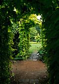 Bögen bewachsen mit Humulus lupulus 'Aureus' (Gold-Hopfen) als Durchgang in den Garten