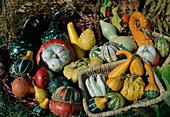 Bunte Mischung aus verschiedenen Zierkuerbissen, Speisekuerbissen (Cucurbita) und Kalebasse (Lagenaria)