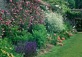 Staudenbeet mit Rosa (Kletterrose) an der Mauer, Salvia nemorosa (Steppensalbei, Ziersalbei), Crambe cordifolia (Riesen-Schleierkraut) und Papaver orientalis (Orientalischer Mohn)