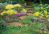 Aubrieta (Blaukissen) und Alyssum saxatila (Steinkraut) wachsen zwischen Natursteinen und in Fugen