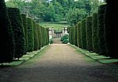 Allee mit säulenförmig geschnittenen Taxus (Eiben) führt zu Treppe und eisernem Tor mit Torpfosten
