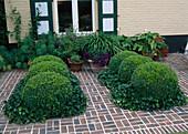 Beete mit Buxus (Buchs-Kugeln) eingefasst mit Hedera (Efeu) in Klinkerpflaster eingelassen, Töpfe mit Kuebelpflanzen an der Hauswand