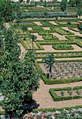 Der Schlossgarten von Villandry : Kieswege, Gemuesebeete eingefasst mit Hecken aus Buxus (Buchs), Birnbaum (Pyrus), Rosa (Rosen) Staemmchen