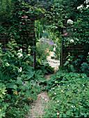 Naturgarten mit bewachsener Mauer mit Actinidia kolomicta (Strahlengriffel, Schmuckblattkiwi) und Rosa (Kletterrose) als Durchgang , Geranium (Storchschnabel), Rhlomis (Brandkraut), Kiesweg