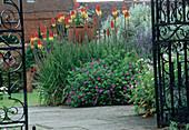 Blick durch offenes Gartentor aus Kniphofia (Fackellilie) und Geranium (Storchschnabel)