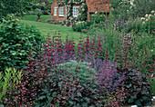 Beet mit Heuchera (Purpurglöckchen), Penstemon (Bartfaden), Nepeta (Katzenminze) und Artemisia (Silberraute), Blick über Rasenfläche, Hauswans mit Rosa (Kletterrrosen)