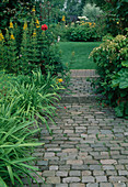 Gartenweg führt zur Rasenfläche, Lysimachia (Goldfelberich), Hydrangea petiolaris (Kletter-Hortensie)