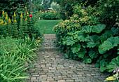 Gartenweg führt zur Rasenfläche, Lysimachia (Goldfelberich), Hydrangea petiolaris (Kletter-Hortensie), Peltiphyllum peltatum (Schildblatt)