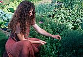 Frau pflückt Basilikum (Ocimum basilicum) im Bauerngarten