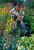 Mädchen giesst Kohl (Brassica), Anthemis tinctoria (Färberkamille), Cosmos (Schmuckkörbchen)