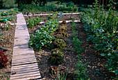 Entwicklung eines Gemüsegartens 4. Step: August