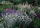 Blumenbeet: Lychnis coronaria 'oculata' (Vexiernelke), Galega (Geissraute), Veronica (Ehrenpreis)
