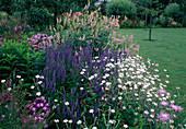 Blumenbeet: Veronica longifolia (Ehrenpreis), Galega officinalis (Geissraute), Lychnis coronaria 'Alba'(Vexiernelke), Phlox (Flammenblumen)