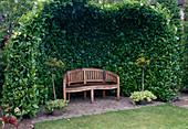 Gartenbank unter Laube aus Prunus laurocerasus 'Rotundifolia' (Kirschlorbeer)