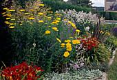 Achillea filipendulina'Gold Plate' (Schafgarbe), Veronica longifolia 'Blauriesin' (Ehrenpreis), Hemerocallis 'Berlin Red' (Taglilien) und Campanula (Glockenblumen)