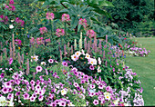 Petunia (Petunien), Dahlia (Dahlien), Agastache foeniculum (Duftnessel), Cleome spinosa (Spinnenblume), Verbena (Eisenkraut), Ricinus (Wunderbaum)