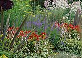 Buntes Staudenbeet : Veronica spicata 'Blauteppich' (Ehrenpreis), Hemerocallis 'Berlin Red' (Taglilien) , Hosta (Funkien) und Achillea filipendulina (Schafgarbe)