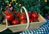 Korb mit Tomaten 'Carmelo' (Lycopersicon)