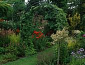 Acer campestre 'Carnival' (Weißbunter Feldahorn), Rasenweg durch Torbogen mit Hedera helix (Efeu), Lilium 'Red Night' (Lilien), Campanula (Glockenblumen)