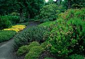 Erica arborea alpina