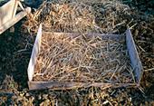 Gemüselager in der Erde 3. Step: Mit Stroh abdecken