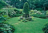 Seckseckige Rasenfläche mit formgeschnittenem Baum, Baumbank und Alchemilla mollis (Frauenmantel) in der Mitte, Rosa (Rosen), Mahonis (Mahonien), Beete eingefasst mit Hecken aus Hedera helix (Efeu)