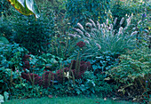 Pennisetum alopecuroides 'Hameln' (Federborstengras), Sedum 'Bertram Anderson' (Fetthenne)