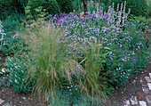 Stipa tenuifolia (Haargras), Amsonia salicifolia (Blausternbusch), Stachys byzantina (Wollziest), Lavandula (Lavendel), Salvia nemorosa (Steppensalbei)