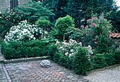 Rosa 'Pleine de Grâce' 'Ballerina'(Rosen) in Beet mit Taxus (Eiben) als Einfassung, Robinia 'Umbraculifera' (Kugelrobinie), Rheum (Zierrhabarber), Klinkerpflaster