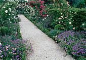 Laubengang mit Rosenboegen : Rosa 'Paul Transon''Pink Perpetue' 'Maria Lisa' (Kletterrosen), Geranium (Storchschnabel), Buxus (Buchs) Weg mit Schotter