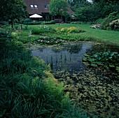 Naturteich mit Nymphaea (Seerosen), Menyanthes trifoliata (Fieberklee), Pontederia cordata (Hechtkraut), Oenanthe (Wasserfenchel), am Ufer Gräser, Hosta (Funkie), Alchemilla mollis (Frauenmantel) und Farne