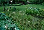 Gartenteich mit Oenanthe aquatica (Wasserfenchel), Sagittaria (Pfeilkraut), Pontederia cordata (Hechtkraut), am Ufer Hosta (Funkien), Sitzgruppe auf dem rasen, hinten Haus mit Buxus (Buchs) Wolkenschnitt
