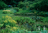Gartenteich : Menyanthes trifoliata (Fieberklee), Alisma (Froschlöffel), Nymphaea (Seerosen), am Ufer Alchemilla mollis (Frauenmantel), Hosta (Funkien), Astilbe (Prachtspiere)
