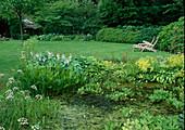 Naturteich mit Menyanthes trifoliata (Fieberklee), Pontederia cordata (Hechtkraut), Oenanthe (Wasserfenchel), am Ufer Hosta (Funkie), Alchemilla mollis (Frauenmantel)