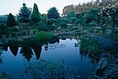 Wassergarten - Rosa ' Albertine' einmalbluehende Kletterrose mit gutem Duft, Picea pungens (Blaufichte)