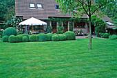 Rasenfläche, Buxus sempervirens (Buchs) Wolkenschnitt , Lavandula (Lavendel) und Wisteria (Blauregen) am Haus, Terrasse mit Sonnenschirm