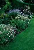 Geranium endressii (Storchschnabel), Astrantia 'Margery Fish' (Sterndolde), Rosa 'Bonica' (Kleinstrauchrose) Staemmchen, Campanula lactiflora 'Blue Caddy' (Glockenblumen), Hosta (Funkien)