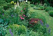 Staudenbeet mit Clematis und Eisenhut in gepflegtem Garten