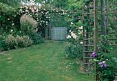 Rosa 'Lêontine Gervais' (Ramblerrose, Kletterrose) an Pergola , Phlomis tuberosa 'Amazone' (Knollen-Brandkraut), Geranium (Storchschnabel) und Clematis (Waldrebe) an Rosenbogen