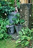 Granit-Säule mit Wasserhahn, alter Waschkessel als Auffangbehälter für Regenwasser, Giesskann und Eimer