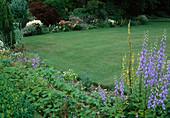 Beete mit Stauden rahmen Rasenfläche ein, Geranium (Storchschnabel), Campanula (Glockenblume), Verbascum (Königskerze)