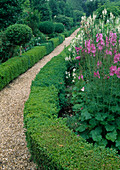 Kiesweg zwischen Beeten eingefasst mit Hecken aus Buxus (Buchs), Sidalcea 'Rose Queen'(Praeriemalve), Galega 'Candida' (Geissraute)