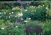 Ueppiges Beet mit Stauden und Rosen : Salvia nemorosa (Ziersalbei, Steppensalbei), Lilium longiflorum (Lilien), Geranium (Storchschnabel), Rosa (Rosen), Aruncus dioicus (Waldgeissbart), kleine Laube an Mauer