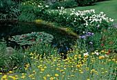 Wassergarten : Teich mit Nymphaea (Seerosen), Zantedeschia aethiopica (Kalla, Calla), Anthemis tinctoria (Färberkamille), Hemerocallis (Taglilien) und Iris ensata (Sumpfschwertlilie) als Ufer-Bepflanzung