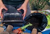 Tomatenaussaat 6. Step: Abdecken der Aussaatschale zur Erhöhung der Luftfeuchte für besseres Wachstum 6/7