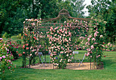 Rosengarten : Rosa 'Paul Transon', 'Albertine' (apricot) ,