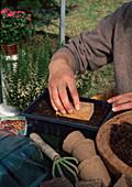 Aussaat von Coreopsis / Mädchenauge einjährig 4. Step: Erde über Samen mit Holzstempel leicht andrücken 4/6